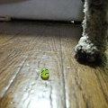 Photos: 悲しき葡萄