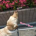 Photos: クンクン