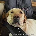Photos: ぶさいく№1!!