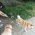 Photos: 愛されキャラ