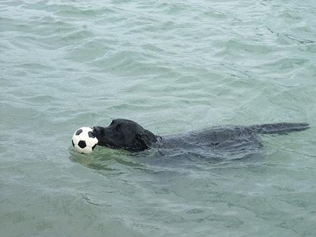 さらに泳ぐ・・・