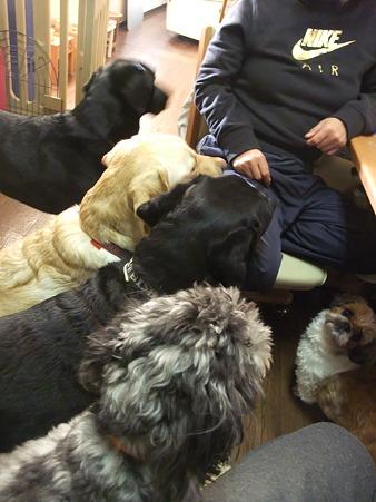 食べ物に群がる犬軍団