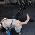 Photos: なんやこれ?!の犬達