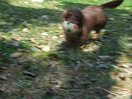 ボール遊び大好き~~