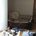 Photos: 蘭のベッドもちゃんとあるよ