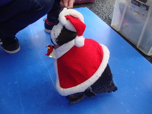 見返りサンタペンギン