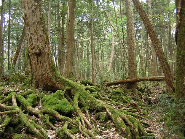 11 原生林