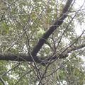 緑の中の緑 保護色