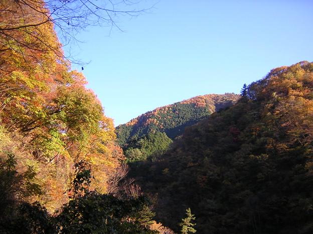 '12紅葉狩 冬晴れ