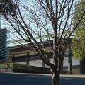 写真: 宮殿東庭 松の塔