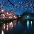 春雨降る夜桜と神池と