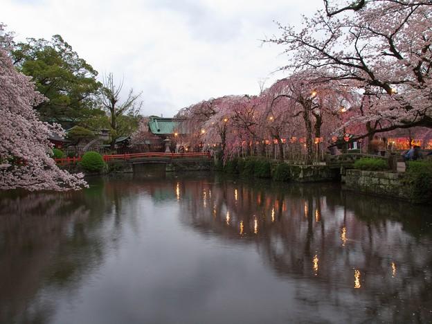 写真: 神池に映る灯火