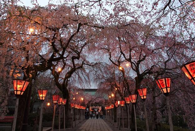 夜桜咲く総門へ続く参道