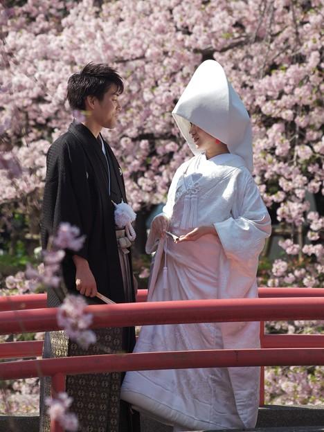 春の花嫁サクラに囲まれて♪