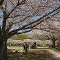 写真: 桜咲く公園でのひととき *a