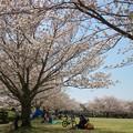 写真: 桜咲く公園でのひととき *d