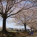 写真: 桜咲く公園でのひととき *e