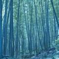 竹林の春の陽射し