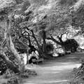 写真: 木陰で女子会話