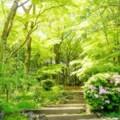 写真: つつじ咲く新緑に囲まれた小径