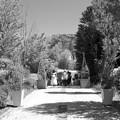 Photos: クレマチスガーデンへの誘い