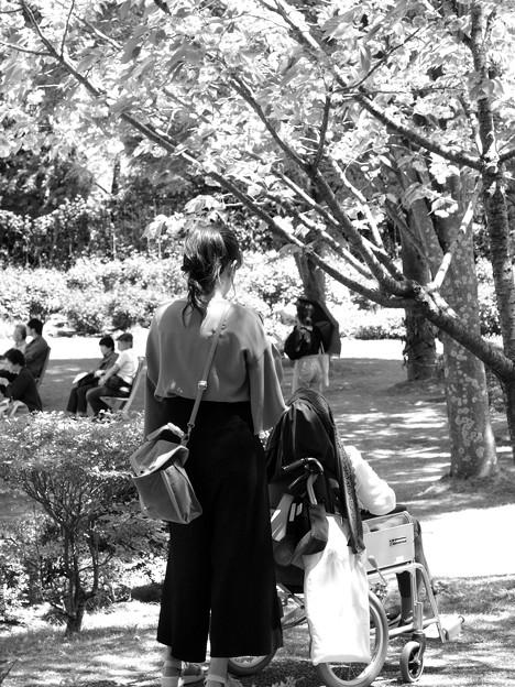 写真: 初夏のガーデンの木陰
