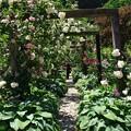 写真: 薔薇の香り漂う小径
