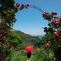 MARY POPPINS in Rose garden