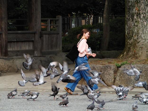 鳩は平和の象徴と云われるが…*a