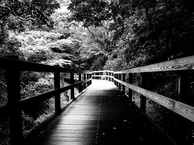 雨上がりの遊歩道 *a