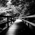 写真: 雨上がりの遊歩道 *a