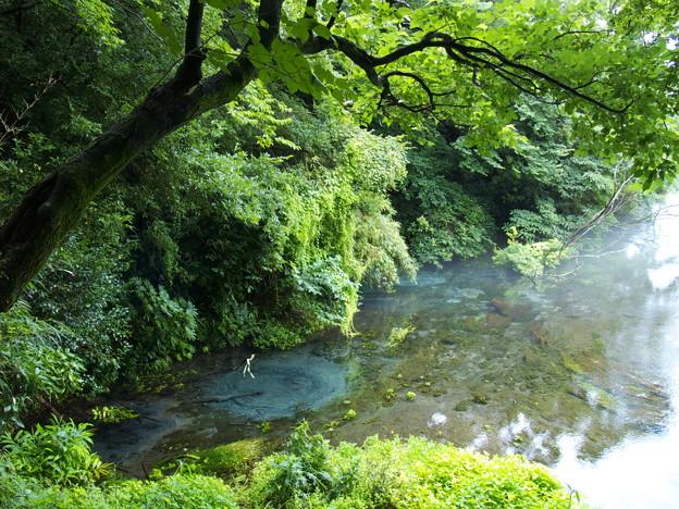 湧水溢るる柿田川 *a