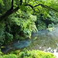 写真: 湧水溢るる柿田川 *a