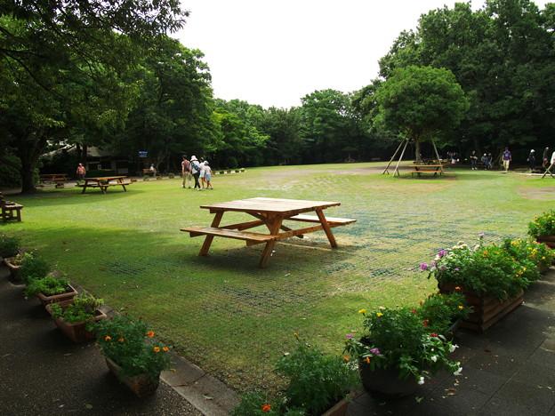 柿田川公園の夏