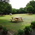 写真: 柿田川公園の夏