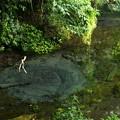写真: 湧水の調べ~独奏