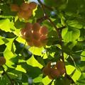 写真: 秋の旬、もうじき旬 *d