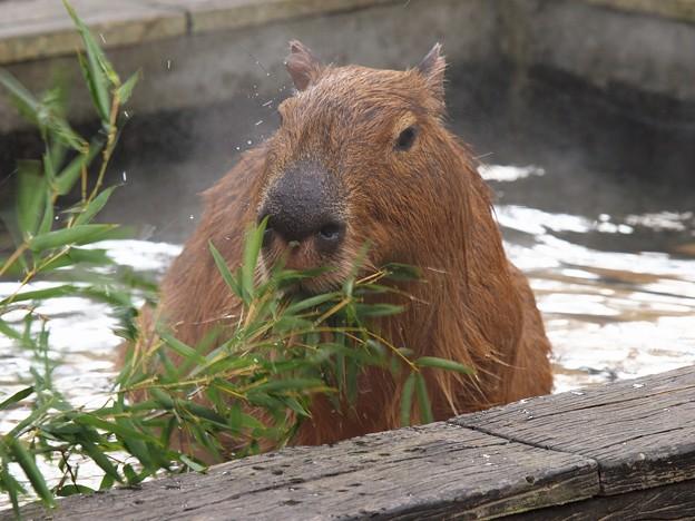 温泉に浸かって食べる笹ってサイコー!!!