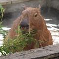 写真: 温泉に浸かって食べる笹ってサイコー!!!
