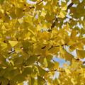 写真: 秋色に染まる