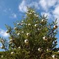 写真: 青空の下のクリスマス
