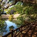 写真: 伊豆の瞳~一碧湖の秋 *b