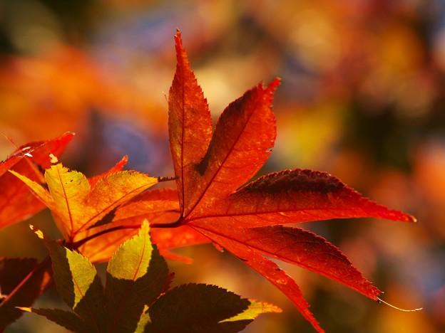 写真: 秋色に染まる *a