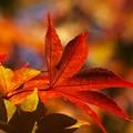 秋色に染まる *a