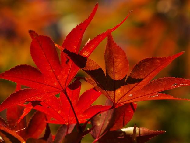 秋色に染まる *b