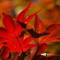 写真: 秋色に染まる *b