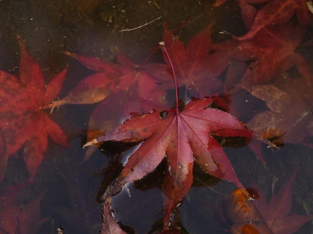 秋色に染まって水遊び *a