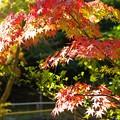写真: 秋の陽射し