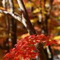 写真: 晩秋の虹の郷 *b
