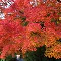 写真: 秋色小径